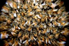 Free Honeybee Swarm Royalty Free Stock Photography - 82989057