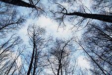 Free Tree Tops Against Blue Skies Stock Image - 82989141