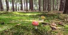 Free Red And White Mushroom Beside Yellow Mushroom Near Green Trees During Daytime Stock Photos - 82989283