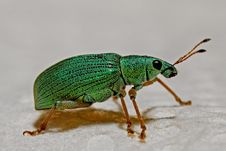 Free Green Black And Brown Insect Stock Photos - 82989293