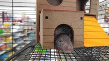 Free Mouse In Cage Royalty Free Stock Photos - 82989548