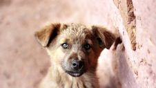 Free Dog Next To Brick Wall Stock Photos - 82989653