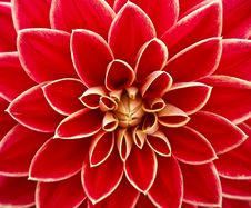 Free Close Up Photography Of Red Petaled Flower Stock Photography - 82989902