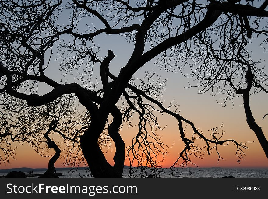 Tree silhouette at sunset