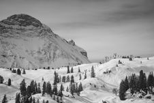 Free Field Filled With Snow With Pine Tress Near Alp Mountain Stock Images - 82990264