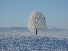 Free Lone Tree Surrounded By Snowcap Mountain Under Blue Sky Royalty Free Stock Photo - 82990265