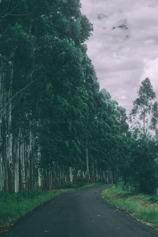 Free Forest Pathway Stock Photography - 82990502