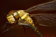 Free Close Up Photo Of Yellow Dragonfly Stock Photography - 82990542
