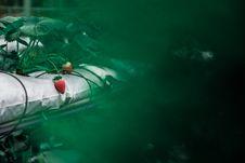 Free Fresh Strawberries On Plant Stock Image - 82990551