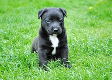Free Black And White Short Coated Puppy Sitting On Green Grass Stock Photo - 82990900