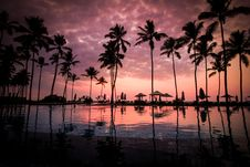 Free Coconut Palm Tress Beside Calm Lake Silhouette Royalty Free Stock Photos - 82990978