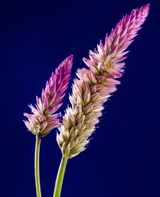 Free Purple And White Clustered Flower Stock Images - 82991024
