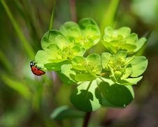 Free Red And Black Bug On Green Leaved Plant Stock Photo - 82991130