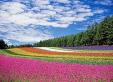 Free Red Yellow And Orange Flower Field Stock Photo - 82991140