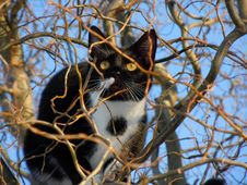 Free Black And White Cat In A Tree Stock Photography - 82991412