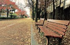 Free Brown Wooden Bench With Brown Dried Leaves Stock Photo - 82991520