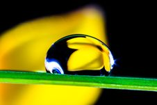 Free Macro Of Water Drop On Green Leaf Stock Photo - 82991660