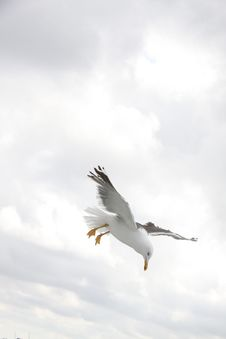 Free Sea Gull On Flight During Daytime Royalty Free Stock Photography - 82991757