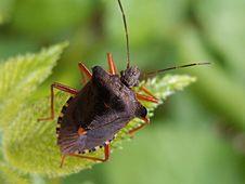 Free Black Orange 6 Legged Insect Hanging On A Green Leaf Plant Stock Image - 82991921