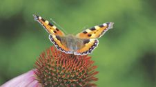 Free Brown Black And Gray Butterfly On Red And Green Flower Royalty Free Stock Images - 82991969