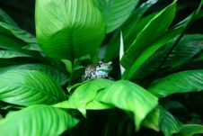 Free Frog On Leafy Plant Royalty Free Stock Photo - 82992115