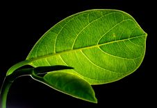 Free Green Flat Oblong Leaf Plant On Close Up Photography Stock Photography - 82992262