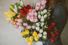 Free Woman Holding Pink White Red And Yellow Tulips Stock Photography - 82992362