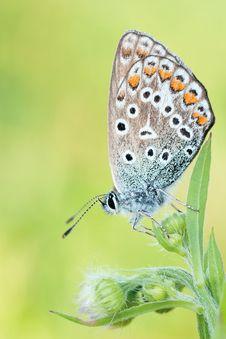 Free Brown Black Butterfly Macroshot Royalty Free Stock Photos - 82992528