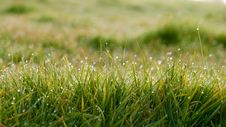 Free Dew On Sunny Grass Royalty Free Stock Images - 82992709