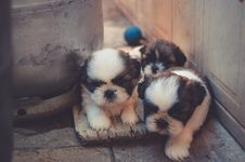 Free Puppies Playing In Backyard Stock Photography - 82992932