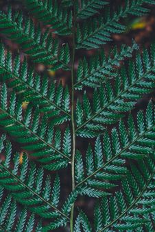 Free Close Photography Of Green Fern Plant Stock Photos - 82993133