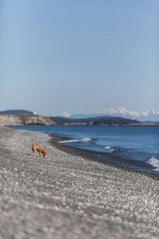 Free Tan Short-coated Medium-sized Dog On Seashore During Daytime Stock Photo - 82993220