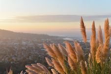 Free Golden Grasses On Hillside Stock Photography - 82993302