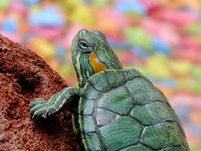 Free Portrait Of Turtle Stock Photo - 82993580