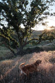 Free Dog Walking In Field Royalty Free Stock Photos - 82993748