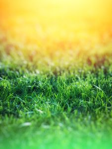 Free Green Grass Over Yellow Background Stock Photography - 82993862