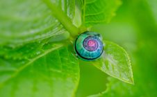 Free Green Pink And Blue Snail On Top Of Green Leaf Stock Photos - 82994403