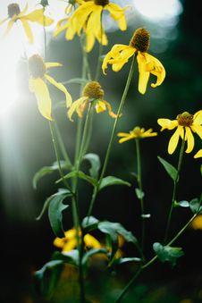 Free Yellow Wildflowers Royalty Free Stock Photos - 82994438