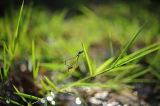 Free Blue Insect On Green Plant On Tilt Shift Lens Photography Stock Photography - 82994642