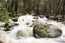 Free Rocks And Trees On Running Water Royalty Free Stock Image - 82994896