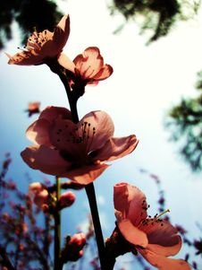 Free Orange Flowers Blooming In Spring Royalty Free Stock Image - 82994966