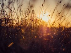 Free Sunset Over Grass In Meadow Royalty Free Stock Image - 82995006