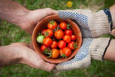 Free Red Tomatoes On Brown Bowl Stock Photography - 82995052