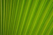 Free Tropical Green Leaves Stock Photography - 82995142