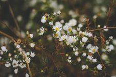 Free White And Yellow Flowers And Green Leaves On Brown Branches Stock Photography - 82995622