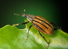 Free Black And Brown Insect On Green Leaf Stock Photography - 82996042