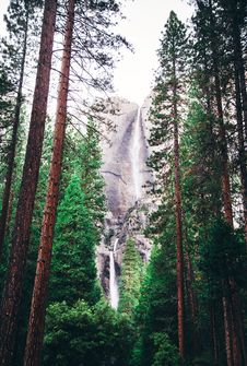 Free Landscape Photography Of Green Trees And Water Falls Royalty Free Stock Photos - 82996148