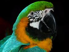 Free Green Black White Yellow And Teal Parrot Stock Photos - 82996223