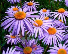 Free Purple Petal Flower Stock Photography - 82996502