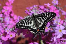 Free White And Black Butterfly On Pink White And Yellow Flowers Stock Images - 82996534